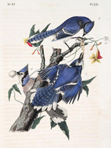 artline, art, artist, John James Audubon at Davidson Galleries